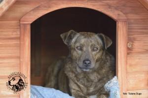 Associazione Amici del Cane di Latina  4
